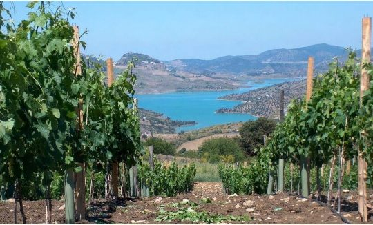 Vineyard with Bodega 18 Ha, Magnificent Views.