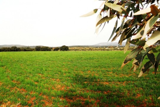 Building Plot, Country House/Rural Hotel, 9 Acres, Ronda