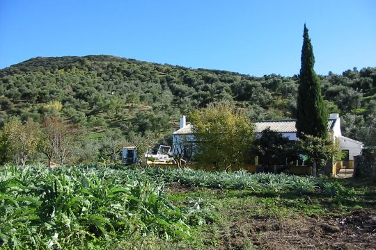 Finca, House 153, 8 Ha, Outbuildings.