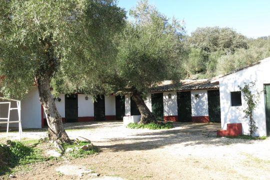 Equestrian – 2 Country Houses, 5 Beds, Stables, Views, Olives