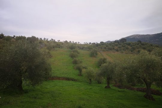 Vines in Production, Olives, Nut trees – 3 Hectares