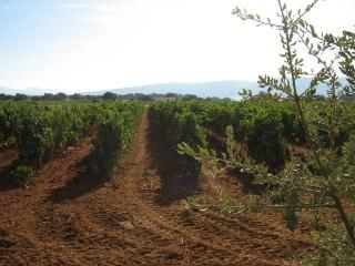 Vineyard and Winery for sale